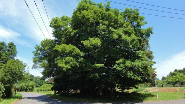 1.巨木.jpg