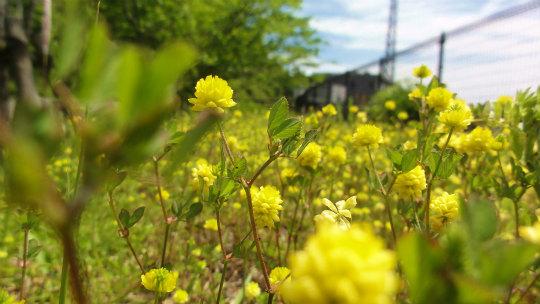 2.黄色い花1.jpg