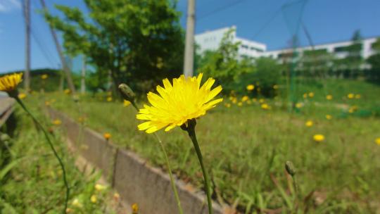 3.黄色い花2.jpg