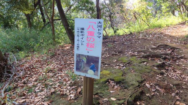 4.八重の桜.jpg