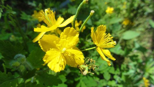 4.黄色い花3.jpg