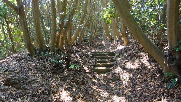5.階段.jpg