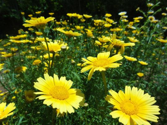 6.黄色い花5.jpg