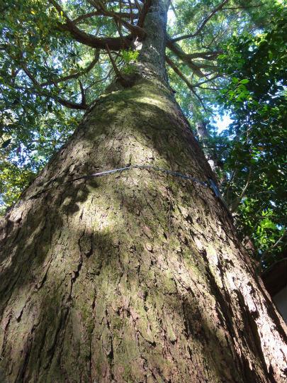 7.巨木.jpg
