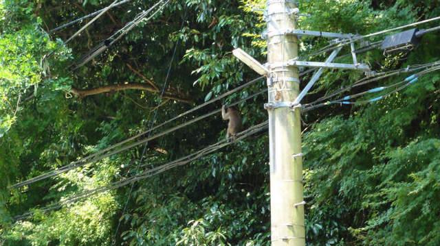 10.猿.jpg