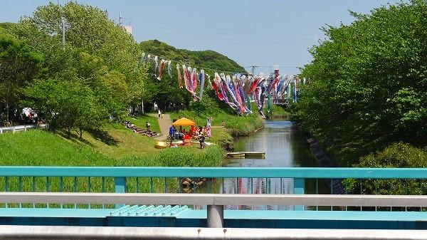 3.矢那川鯉のぼり.jpg