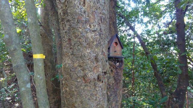 7.小鳥小屋2.jpg